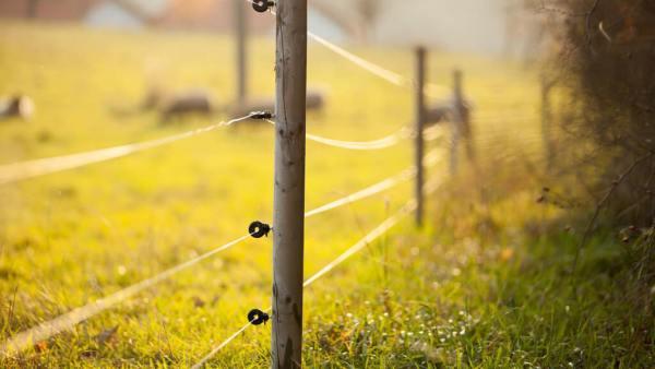 Cerca elétrica rural é sinônimo de eficiência e mais lucro para o produtor