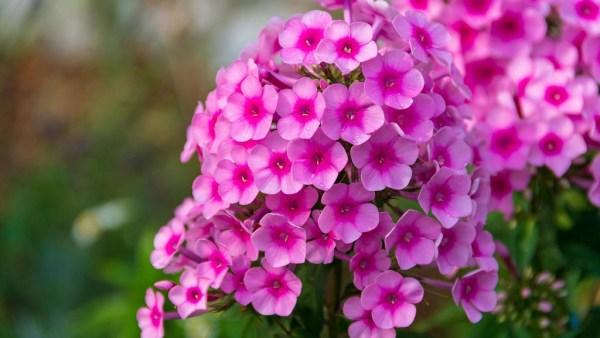 Flores encantam a humanidade e são importantes para os negócios