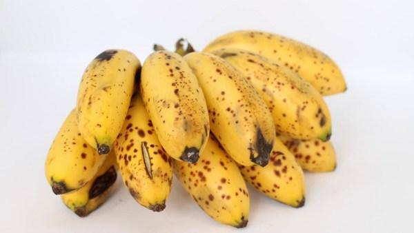 Banana maçã é uma das variedades mais consumidas no Brasil