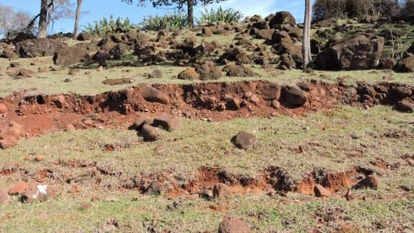Neossolo é solo que destaca diferentes tipos e características variáveis