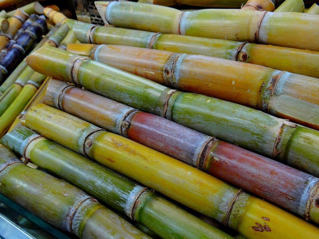 Colmo é um caule encontrado na cana-de-açúcar