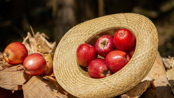 Femaçã é a festa dedicada a fruta que acontece no Sul