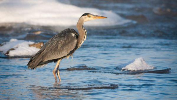 Garça é uma ave que geralmente habita áreas próximas a rios