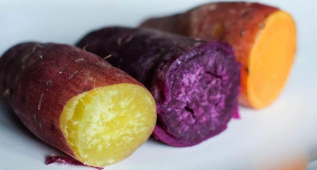 Como plantar batata doce