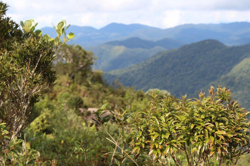 Fitopatologia florestal