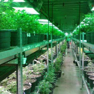 Hortitec é uma importante feira do setor de hortifruti