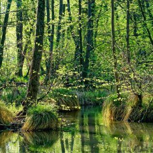 Pântano, importante para o meio ambiente, possui flora e fauna peculiares