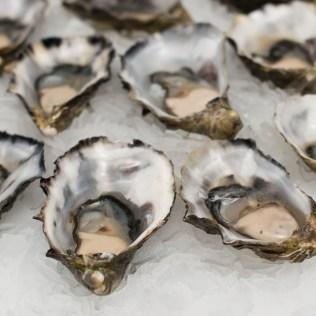 Maricultura é a criação de espécies marinhas com fins comerciais