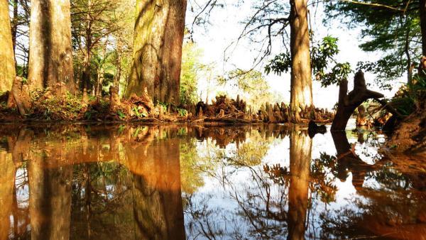 Plano de manejo é obrigatório em todas as unidades de conservação