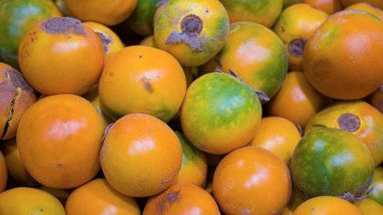 Lulo é uma fruta exótica e saborosa originária da Colômbia