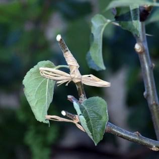 Propagação vegetativa consiste em técnicas para reprodução de plantas