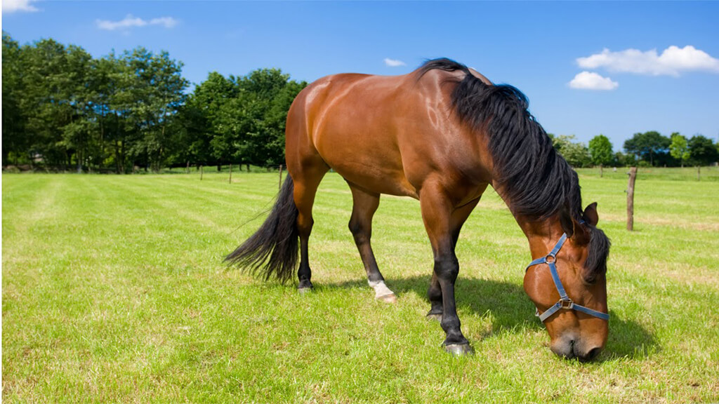 Ração para cavalos