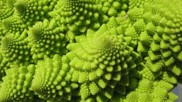 Variados tipos de brócolis contribuem para o consumo do vegetal