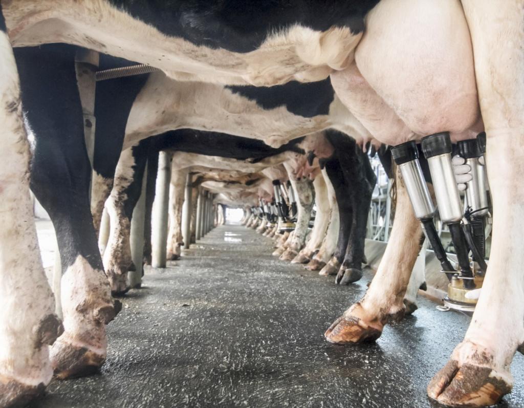 leite tipo A