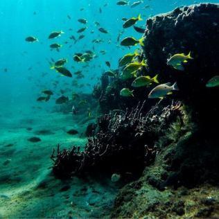 Garoupa é peixe encontrado em fundos coralinos ou rochosos