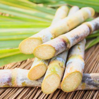 Bagaço de cana é o principal resíduo da agroindústria no Brasil