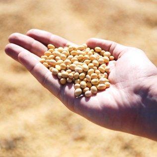 Subprodutos da soja também são destaque na produção brasileira