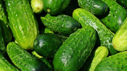 Benefícios do pepino estimulam o consumo do vegetal no cotidiano