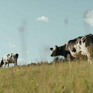 Pastagem para gado é fundamental para o agronegócio brasileiro