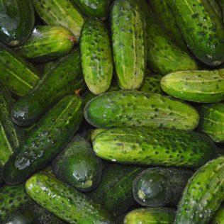 Conheça os tipos de pepino mais consumidos pelos brasileiros