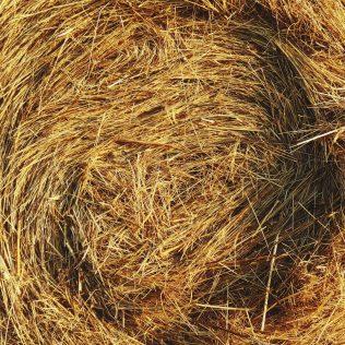 Palha pode ser utilizada como matéria-prima para diversos produtos