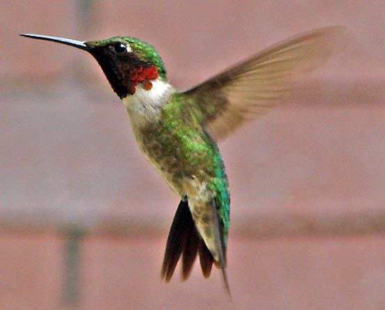 Computers Use eBird Data to Model Probabilities of Bird ...