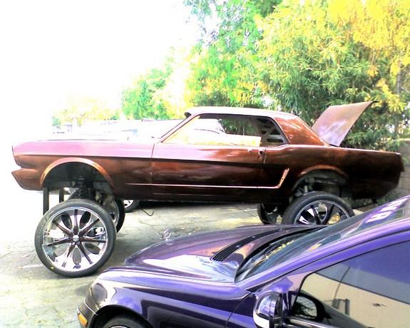 Interesting Mustang Photo