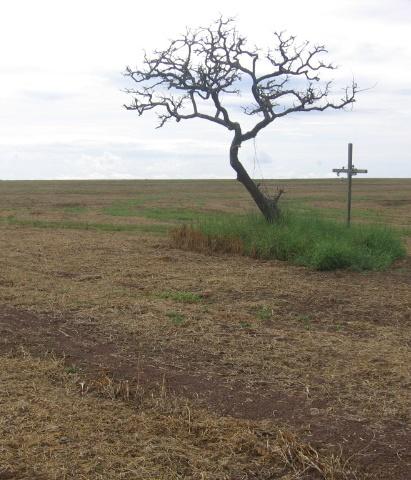 Morte do cerrado, vida da soja. (Foto: Cassio via Flickr)
