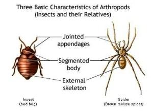 Biology – Phylum Annelida and Arthropoda | askIITians