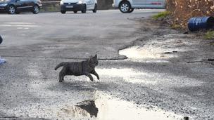 Katze angefahren: Erste Hilfe kann Leben retten