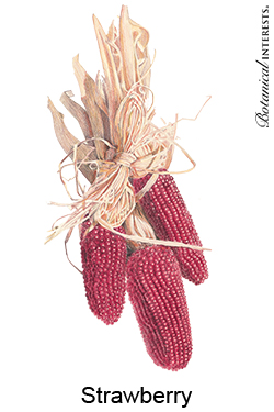 Corn Strawberry