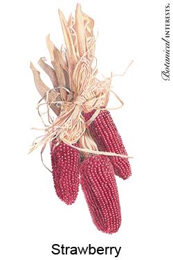 Corn Strawberry