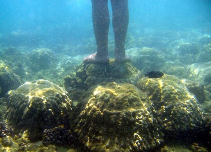 Korallenschäden , Coral Damage