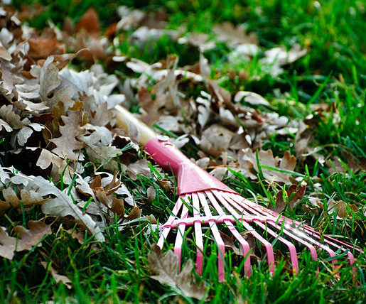 Do You Need Rake Leaves