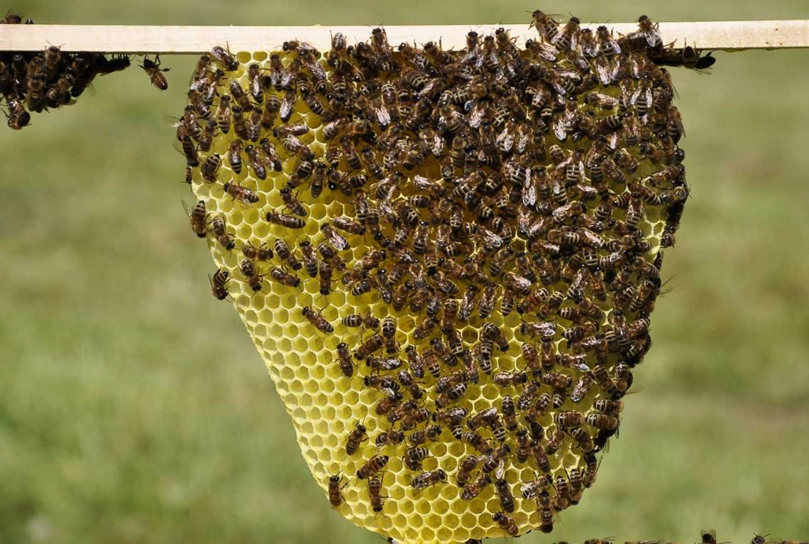 Enjambre de abejas ataca a estudiantes de un colegio en Ibagué   La FM