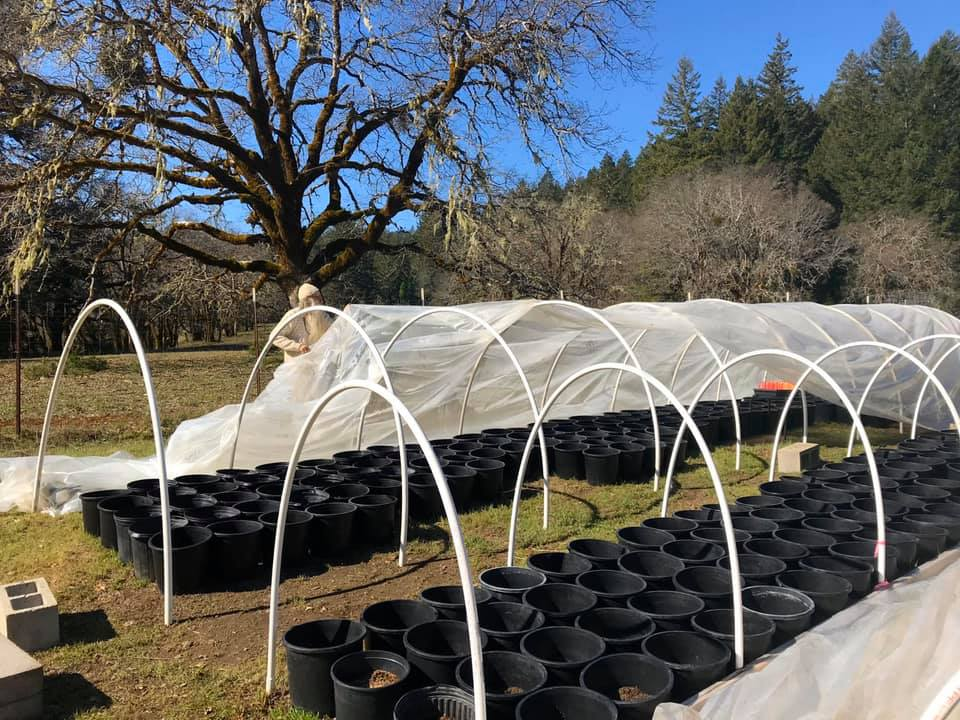 1588282790842_swami-select-spring-planting.jpg