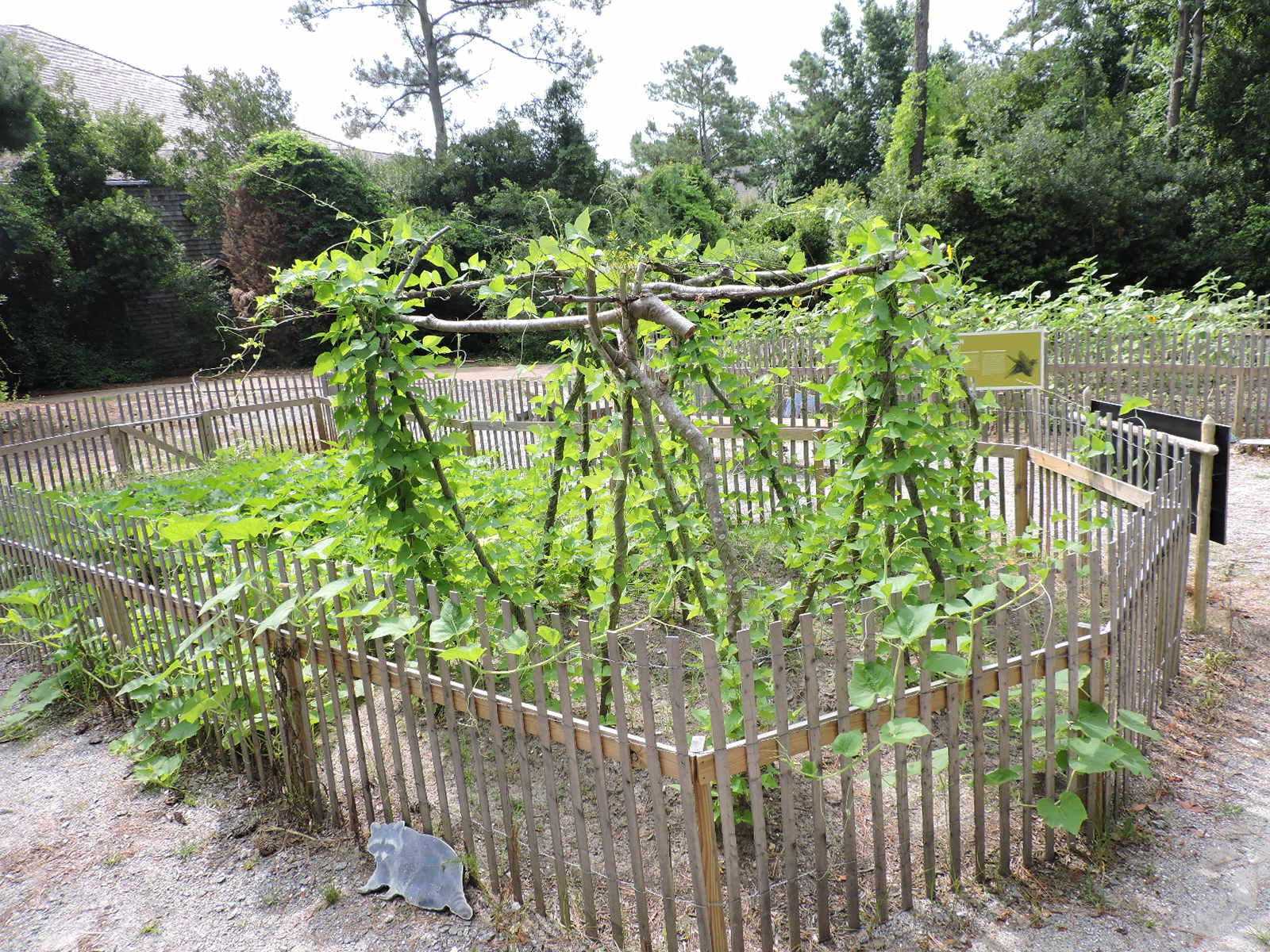 Roanoke Island: Spring Gardening Tips From American Indian