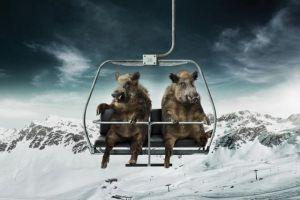 Berner Oberland: Ein «Pistensau»Opfer berichtet  Region