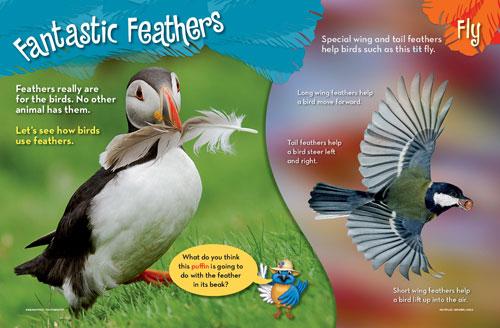 Fantastic Feathers 11 2012 1