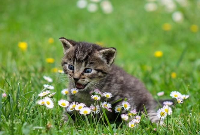 A kitty attacking some flowers.