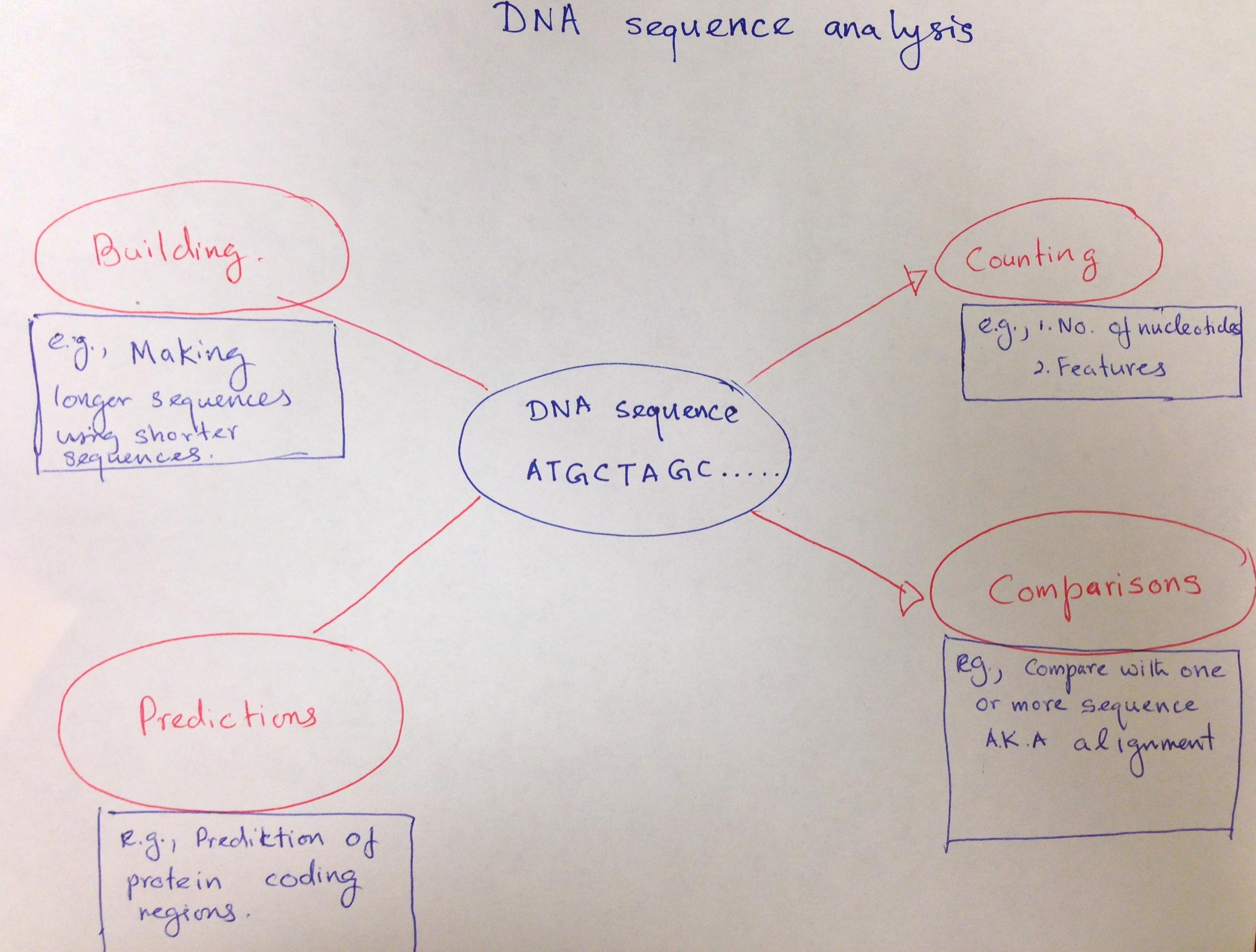 Concept Map Dna Sequenceysis