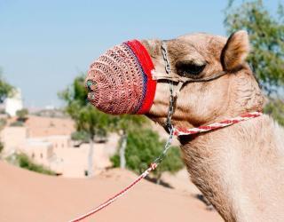 UAE_resorts_14