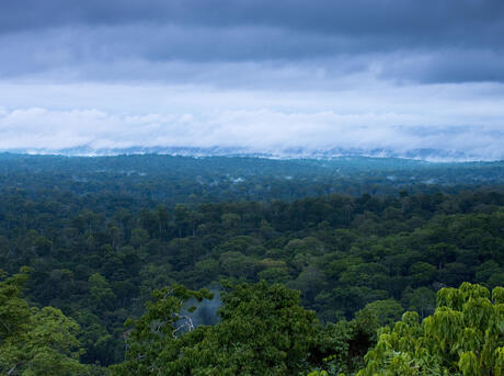 More than half of the total forest land in india has been declared reserved forests. Forest Habitat Habitats Wwf