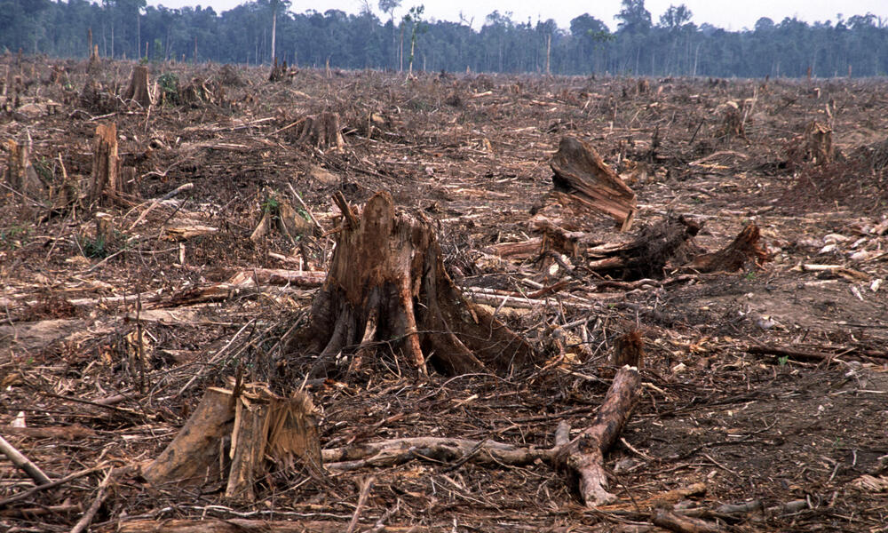 The effects of deforestation have permanent environmental consequences. Deforestation And Forest Degradation Threats Wwf