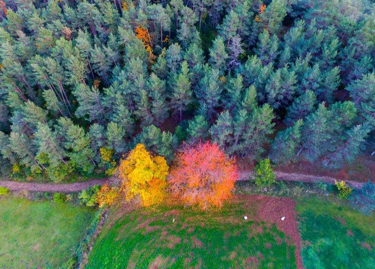 El Creaf de la UAB impulsa el primer concurs de fotografia de boscos fetes amb dron