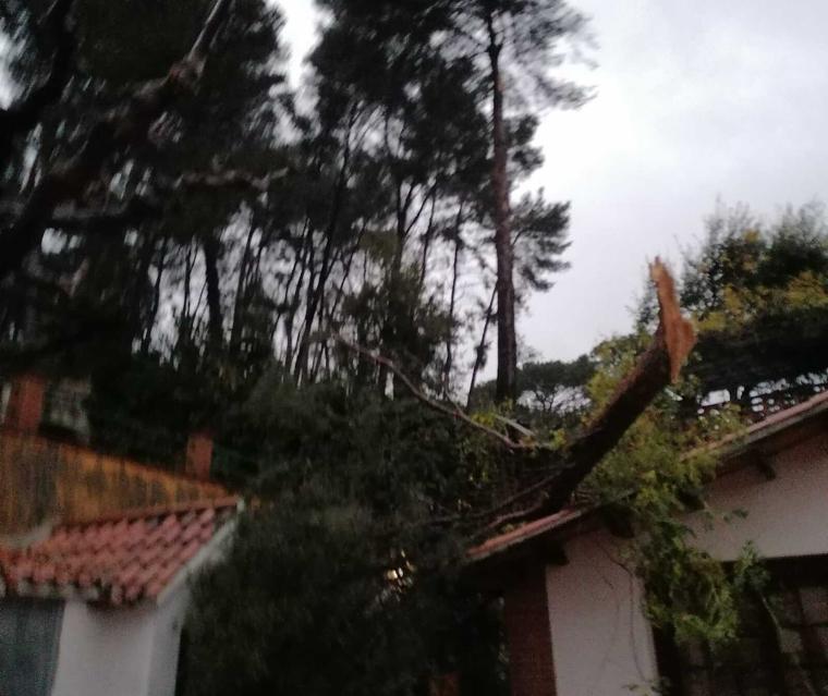 Algunes branques de grans dimensions han caigut sobre les cases a causa del temporal