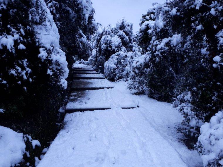 Imatge de Collserola el matí del 20 de març