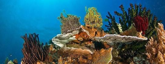 Duiken - Apo Island, Negros Oriental, Central Visayas, Filipijnen