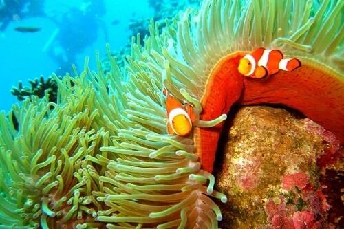 Snorkelen Balicasag Island - Bohol, Central Visayas, Filipijnen