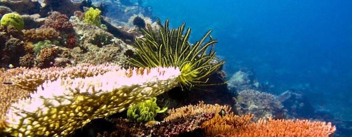 Het zeereservaat van Apo Island biedt zeer goede mogelijkheden om te snorkelen en te duiken